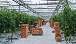 Прогнозы Минсельхоза по росту тепличного овощеводства слишком оптимистичны