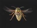 Водитель превысил скорость, чтобы обогнать пчелу в салоне автомобиля
