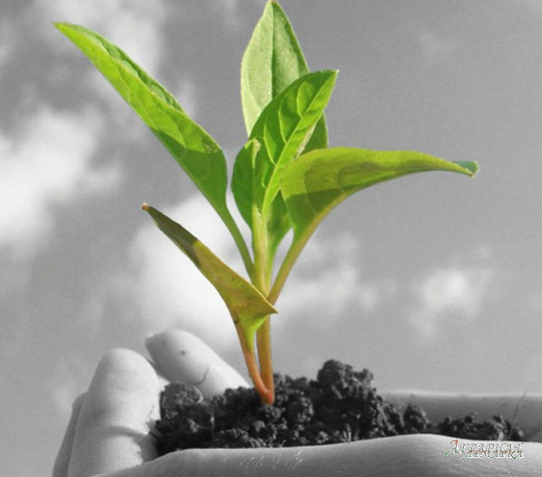 Средства Защиты Растений (Пестициды,    гербициды,    инсектициды)