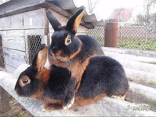 "Комбикорм для кроликов ""мистер кролик"""