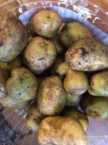 Картофель оптом от прямого поставщика