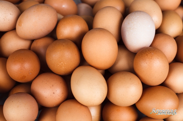 Яйцо инкубационное несушки Ломан-Браун.