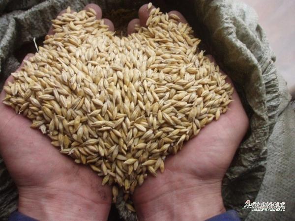Пшеница,  кукуруза,  овес,  ячмень и  в розницу