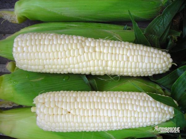 Белая кукуруза зерно,  крупа,  мука.