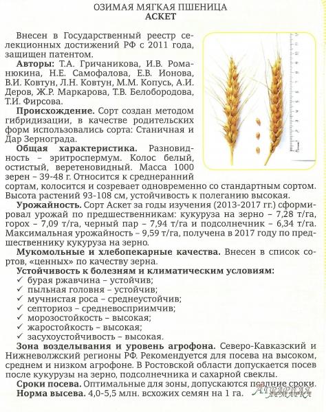 "Семена Озимой пшеницы  сорт ""Аскет"""