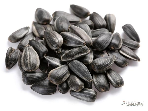 Семена подсолнечника сербской селекции