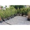 Декоративные растения для ландшафтного дизайна и озеленения