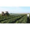 Химическая защита растений,  дезсредства