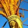 Инвестиции требуются,  оптовая торговля зерном,  экспорт.  Урожай 2016.