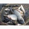 Живая рыба.  Продажа живой рыбы в Калуге.