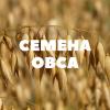 Продам семена ярового овса на посев
