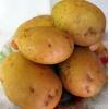 Картофель оптом,  столовый,  калибр 5, 7+