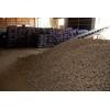 Картофель от 20 тонн доставка по всей России