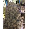 Реализуем продовольственный и семенной картофель