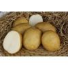 Семенной картофель (элита)   от СеДеК