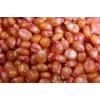 Продам семена кукурузы фирмы Монсанто