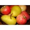 Тургор АМ - вентиляционное оборудование для фруктохранилищ