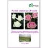 Рынок свежих роз России – 2016.    Баланс спроса и предложения,    потенциал,    производство,    импорт и тенденции развития