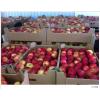 Яблоки от производителя 1 сорт