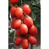 Семена томата Железная леди F1 СеДеК