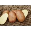 Семенной картофель КРАСА (суперэлита)  от СеДеК