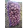 Картофель оптом со склада фермерского хозяйства