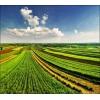 Продам земли с/х назначения 8524 га.   В Ульяновской области