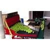 Линия для сортировки и калибровки фруктов,    яблок УКФ-1.   6Ф.    Калибровка и сортировка яблок