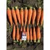 Продаю морковь оптом.
